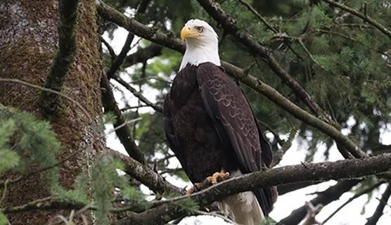 470x270_Eagle.jpeg